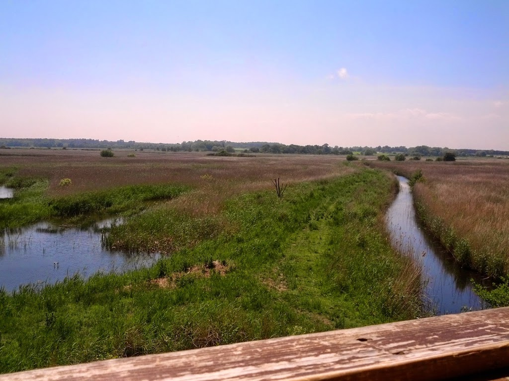 A summer view over the reed beds from the Bittern Hide at RSPB Minsmere
